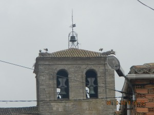 Storks nesting on a church steeple in Tardajos