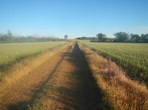 The way through the fields