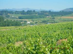 Vineyards!