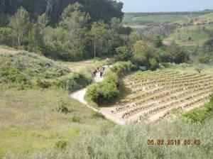 Walking through the vineyards of the Rioja Wine Region.