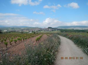 Vineyards on one side and flowers on the other! The beauriful small town of Navarette is in the distance.