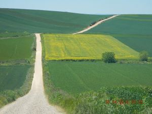 Taken outside of Nájera. I love the field of mustard and the way the road goes up.