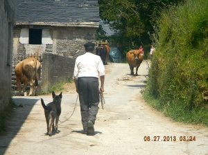 A shepherd, his dog and his flock make an unexpected appearance in La Faba.