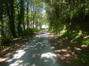 The sun-dappled trail that would soon lead us to Sarria