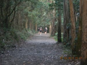 Pilgrims moving ahead of us through the dense eucalyptus forrest outside of O Pedouzo